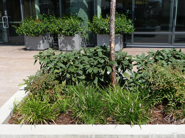 Non-native plants at South Waterfront
