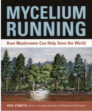 how to clean mycelium agar
