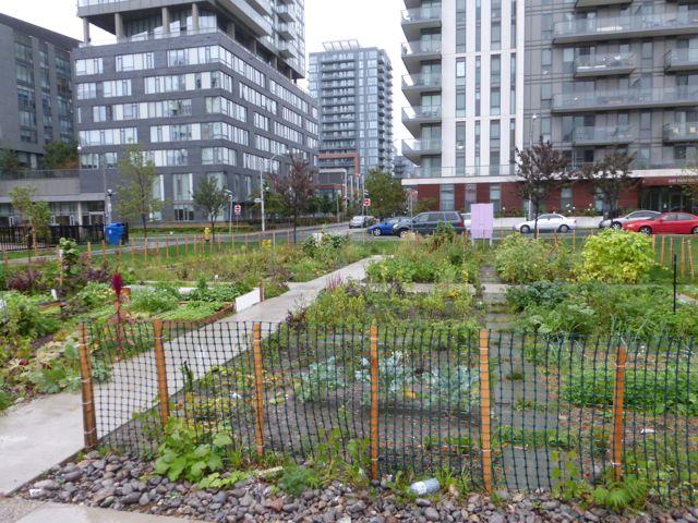 Regent Park Community Garden