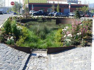 Sandy Boulevard Rain Garden